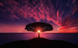 夕日を浴びる木